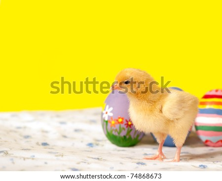 Yellow Easter chick with colorful eggs, on yellow background - stock photo