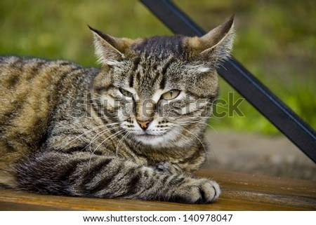 yellow-eyed cat  - stock photo