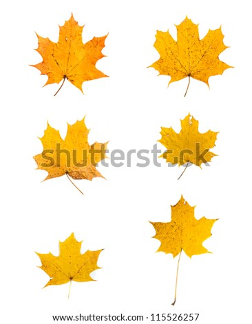 yellow fallen autumn leafs - stock photo