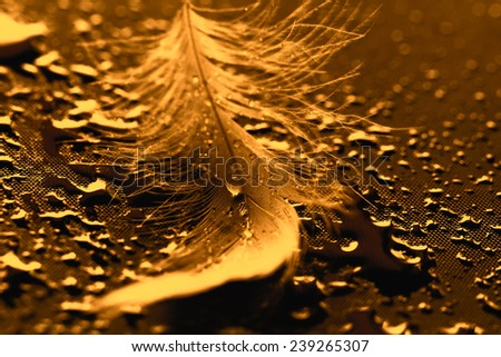 Yellow feather with water drops on dark background - stock photo
