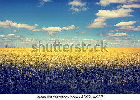 Yellow field and blue sky with white clouds, summer harvest background, nature landscape with yellow flowers, field of rapeseed with beautiful cloud - plant for green energy - stock photo
