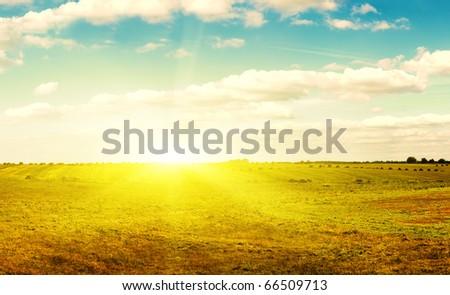 Yellow field of haystacks under blue sky. Sunset. - stock photo
