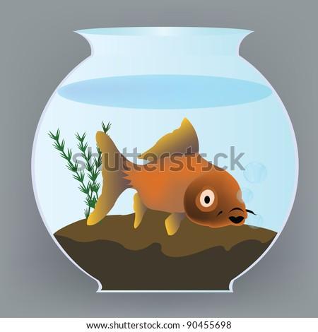yellow fish in aquarium - stock photo