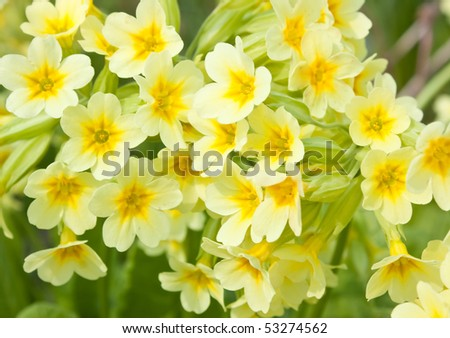 Yellow flower - stock photo