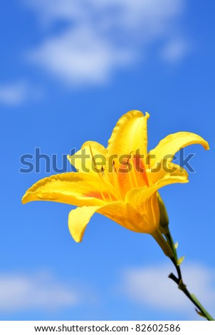 Yellow flower against blue sky - stock photo