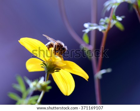 yellow flower and bee - stock photo