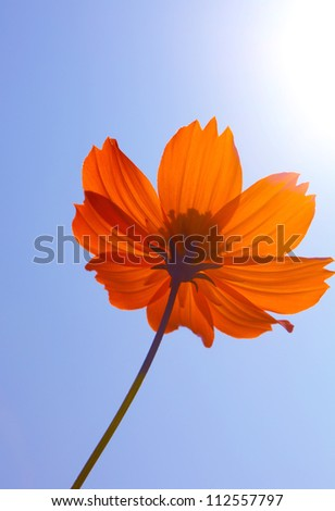Yellow flower and blue sky - stock photo