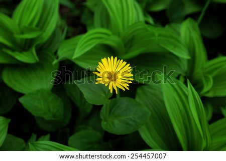 Yellow flower growing among the leaves - stock photo