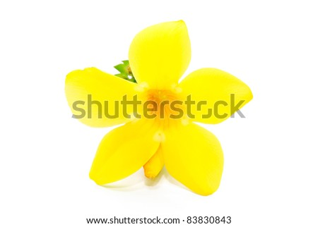 yellow flower isolated on white background - stock photo