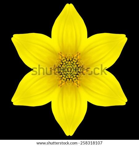 Yellow Flower Mandala. Kaleidoscopic design Isolated on Black Background. Mirrored pattern - stock photo