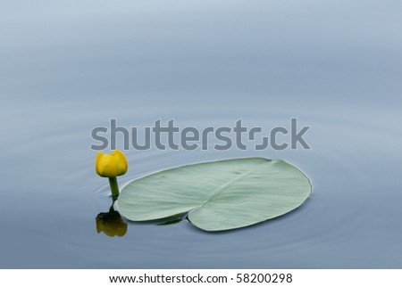 Yellow flower of a lily and leaf in the form of heart - stock photo