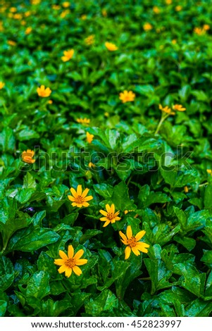 yellow flower on green glass - stock photo