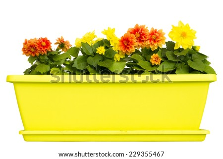 Yellow flower pot with flowers isolated on white background - stock photo