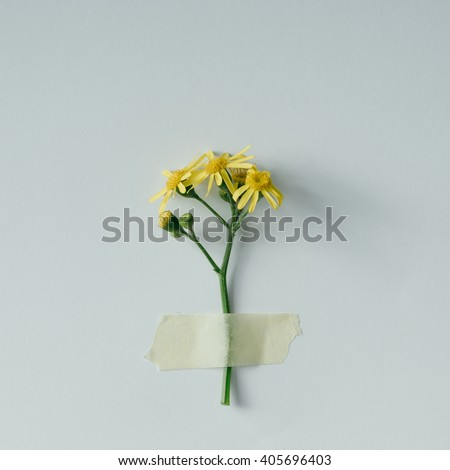 Yellow flower taped to bright background. Minimal concept. - stock photo