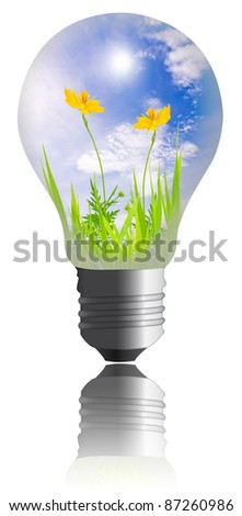 yellow flower with grass growing inside the light bulb  isolated on white background - stock photo