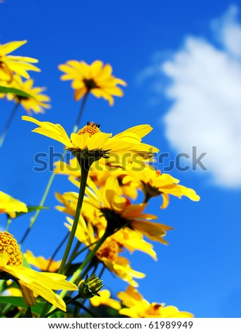 Yellow flowers against  blue sky - stock photo