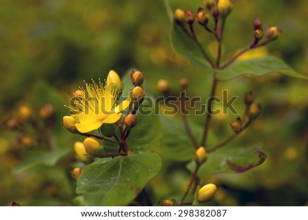 Yellow Flowers and a blurred green background - stock photo