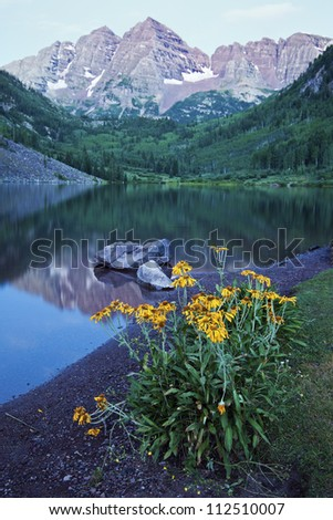 Yellow Flowers and Maroon Bells in the background. Seen before the sunrise. - stock photo