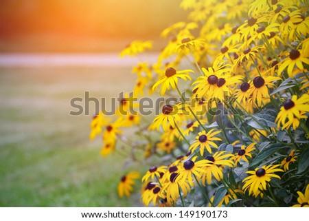 Yellow flowers and sunshine  - stock photo