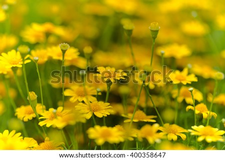 Yellow flowers blooming in the garden summer. - stock photo