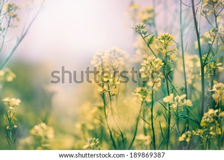 Yellow flowers in a meadow - Spring in a meadow - stock photo