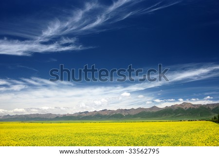 Yellow flowers in front of the jokul. The picture was taken  in Men Yuan county,  Qing Hai province, China. - stock photo