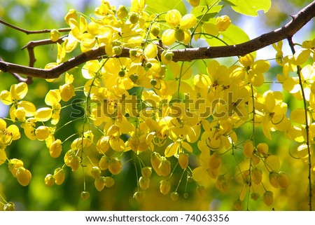Yellow flowers in full bloom - stock photo