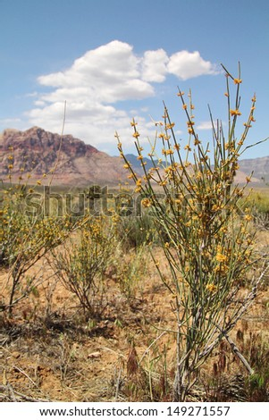Yellow flowers in the desert at Red Rock canyon in Nevada - stock photo