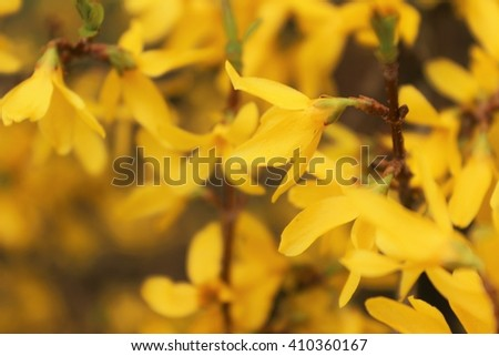 Yellow Flowers. Nature Background. Blurred floral background - stock photo