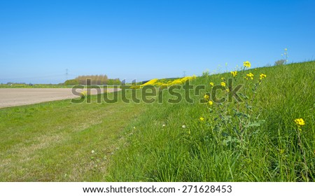 Yellow flowers on a dike in spring - stock photo