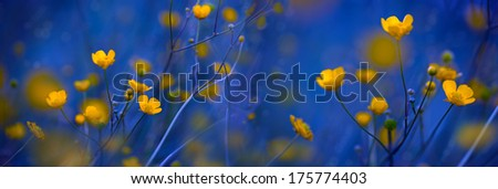 Yellow flowers on blue background - stock photo