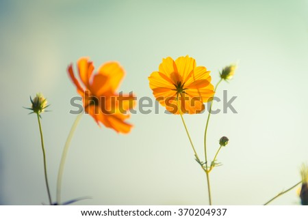 Yellow flowers on light blue pastel shabby with textured background, soft focus and delicate. - stock photo
