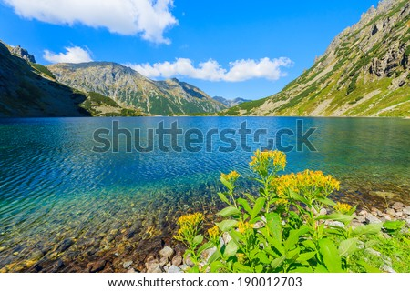 Yellow flowers on shore of a mountain lake Czarny Staw near Morskie Oko on sunny summer day, High Tatra Mountains, Poland - stock photo