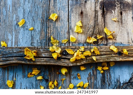 Yellow flowers on vintage wooden texture. Top view. - stock photo