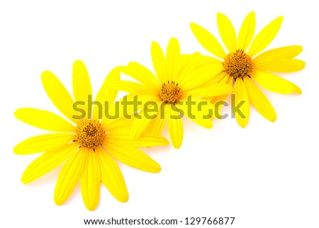 Yellow flowers ornament for the postcard isolated on white background - stock photo