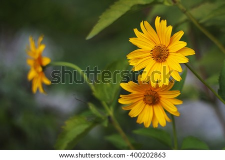 yellow flowers with green leaves - stock photo