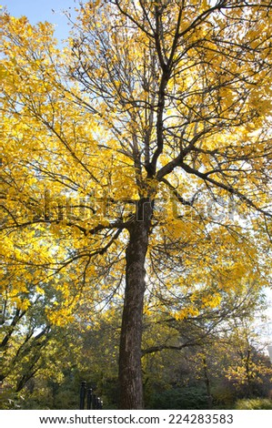 Yellow foliage, Vermont - stock photo