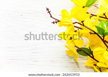 Yellow forsythia flower on a white vintage wood useful as background and greeting card - stock photo