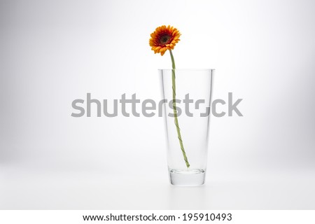 Yellow Gerbera Daisy, Barberton Daisy or African Daisy, in a stylish glass vase for a simple minimalist interior decoration, on a white studio background with copyspace - stock photo