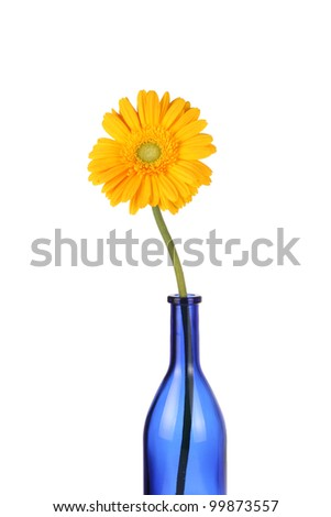 Yellow Gerbera daisy in blue glass bottle - stock photo
