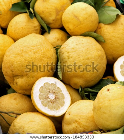 Yellow grapefruits of Sicily just collected from the lush tree orchard in Italy - stock photo