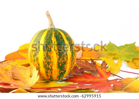 Yellow- green striped pumpkin among autumn colorful leaves. Isolated on white background - stock photo