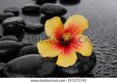Yellow hibiscus flower with therapy stones on wet background - stock photo