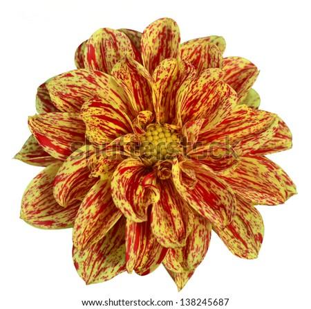 Yellow isolated flower - stock photo