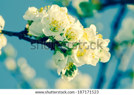 yellow king cup flowers on wooden trunk retro effect - stock photo