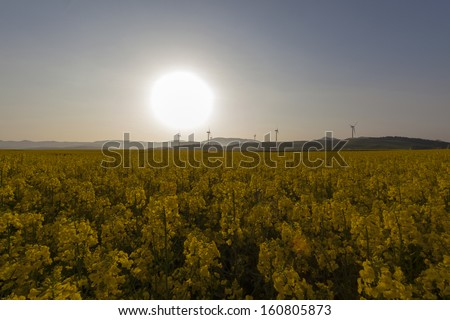 Yellow landscape with turbines and sun - stock photo