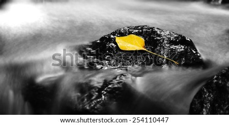 Yellow leaf on a rock near a waterfall - stock photo