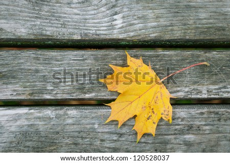 Yellow leaf on the wood texture - stock photo