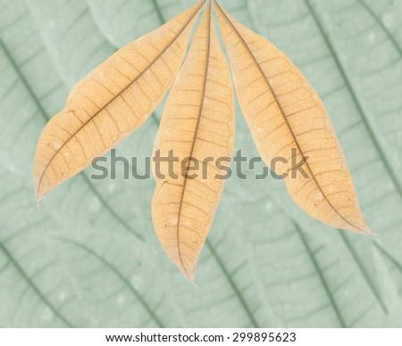 Yellow leaves - stock photo
