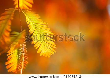 yellow leaves on a background of autumn park - stock photo